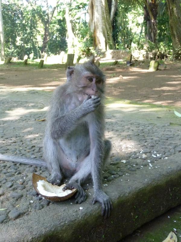 Ubud - Bali46