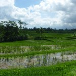 Ubud - Bali06