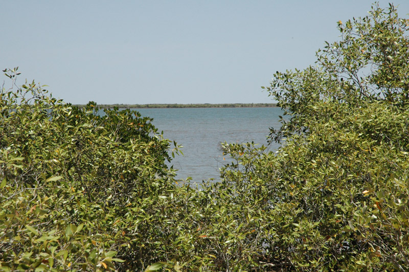 Wilderness Island12