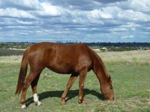 Melbourne à dos de cheval