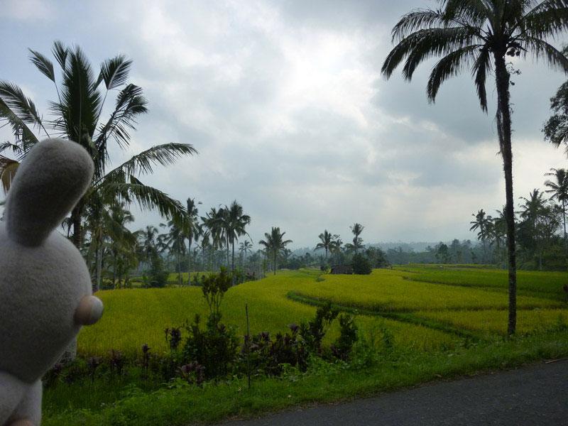 Bali en scooter40