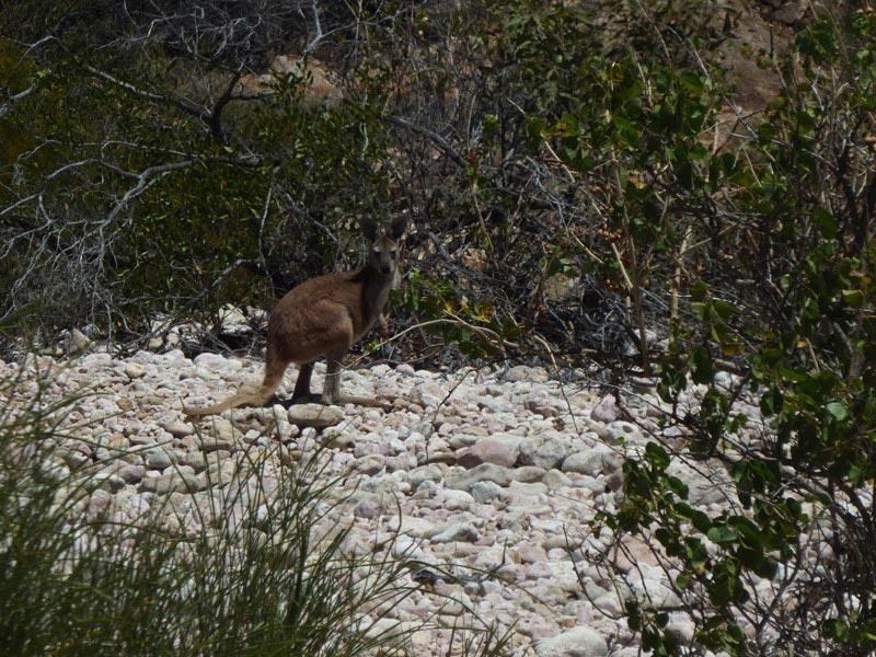 Cape Range National Park14