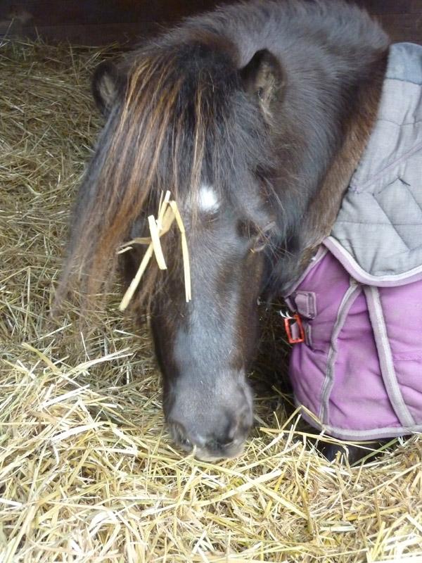 Highfield Equestrian Centre06