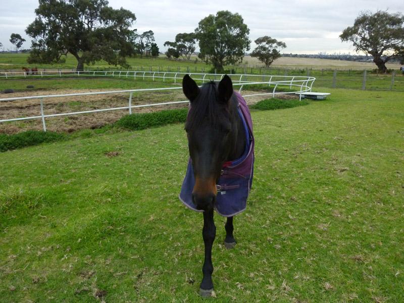 Highfield Equestrian Centre16