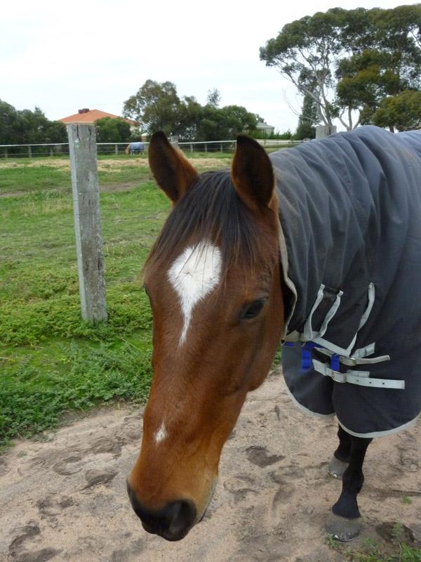 Highfield Equestrian Centre22