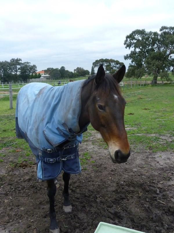 Highfield Equestrian Centre31