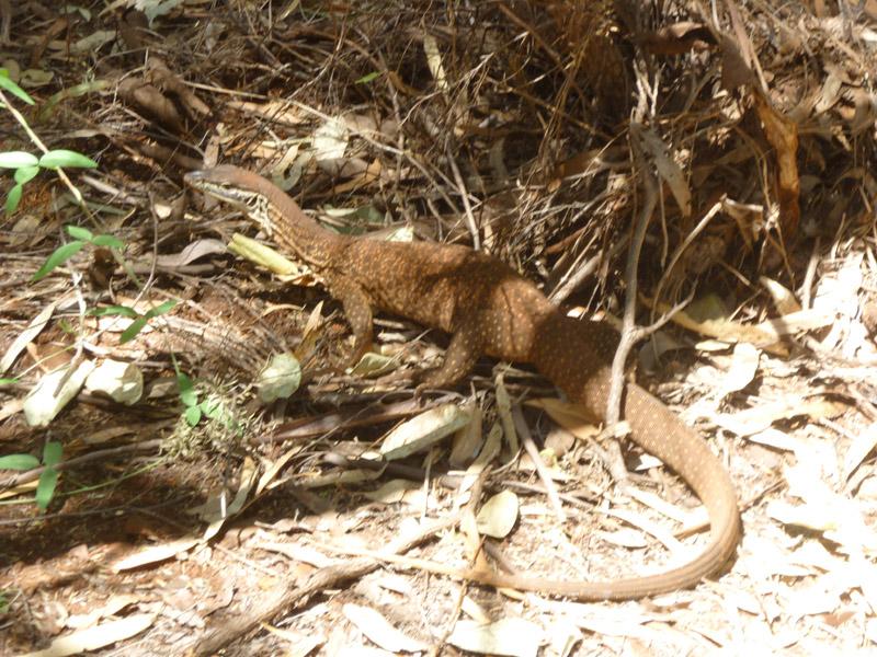 Karijini National Park26