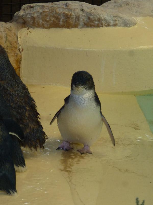 Penguin Island10
