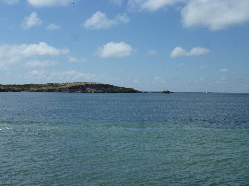 Penguin Island12