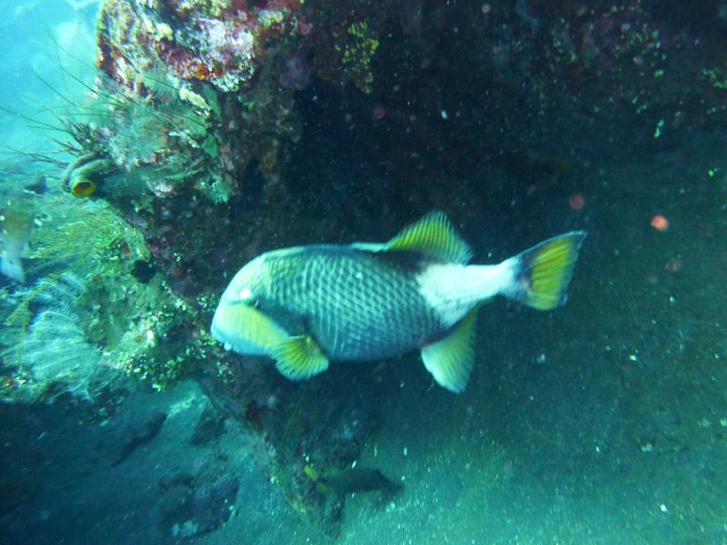 Plongee au Liberty Wreck18