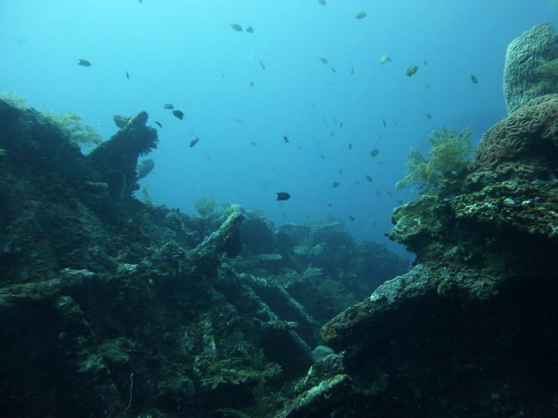 Plongee au Liberty Wreck19