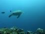 Plongées sous-marines