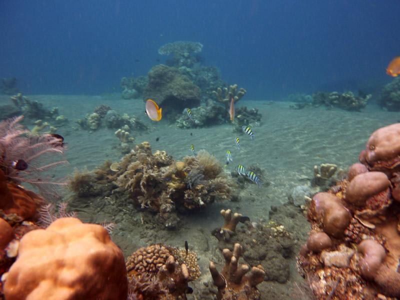 Snorkeling a Jemeluk30