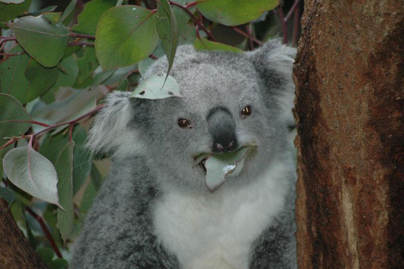 Sydney - Taronga Zoo09