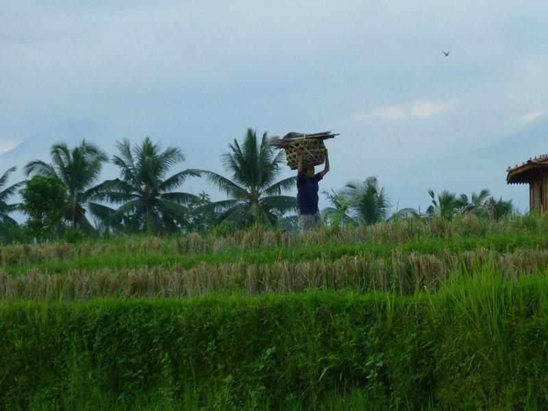 Ubud - Bali30