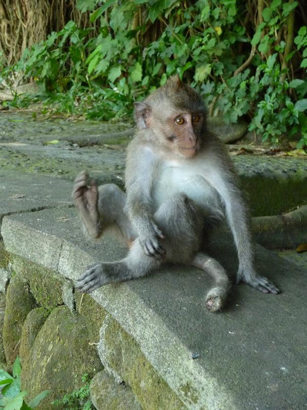 Ubud - Bali31