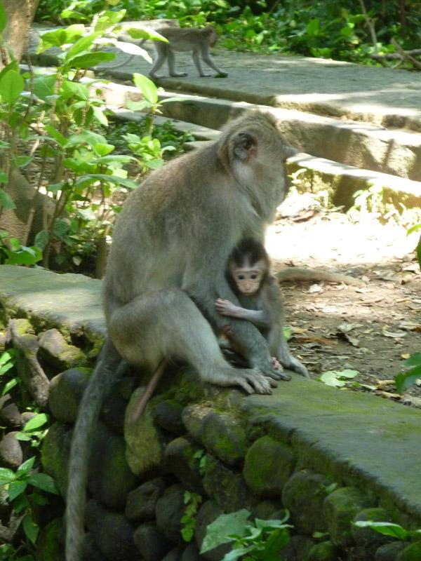 Ubud - Bali33