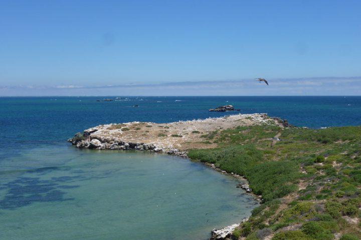 Kings Park et Penguin Island