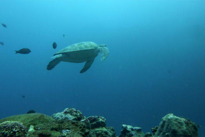 Plongées à La Réunion